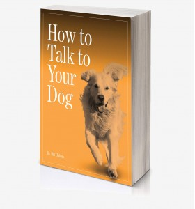 Your Talking Dog